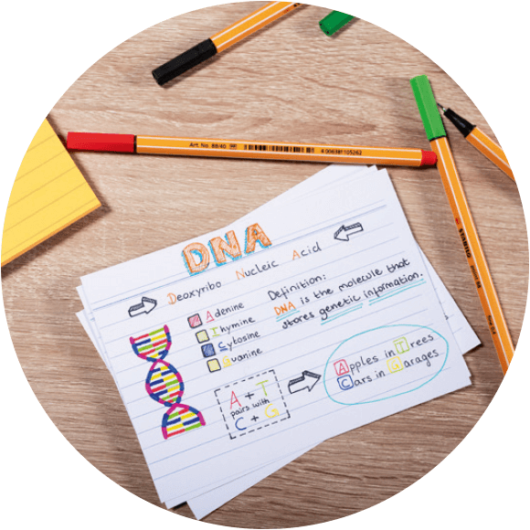 STABILO point 88 DNA flash card